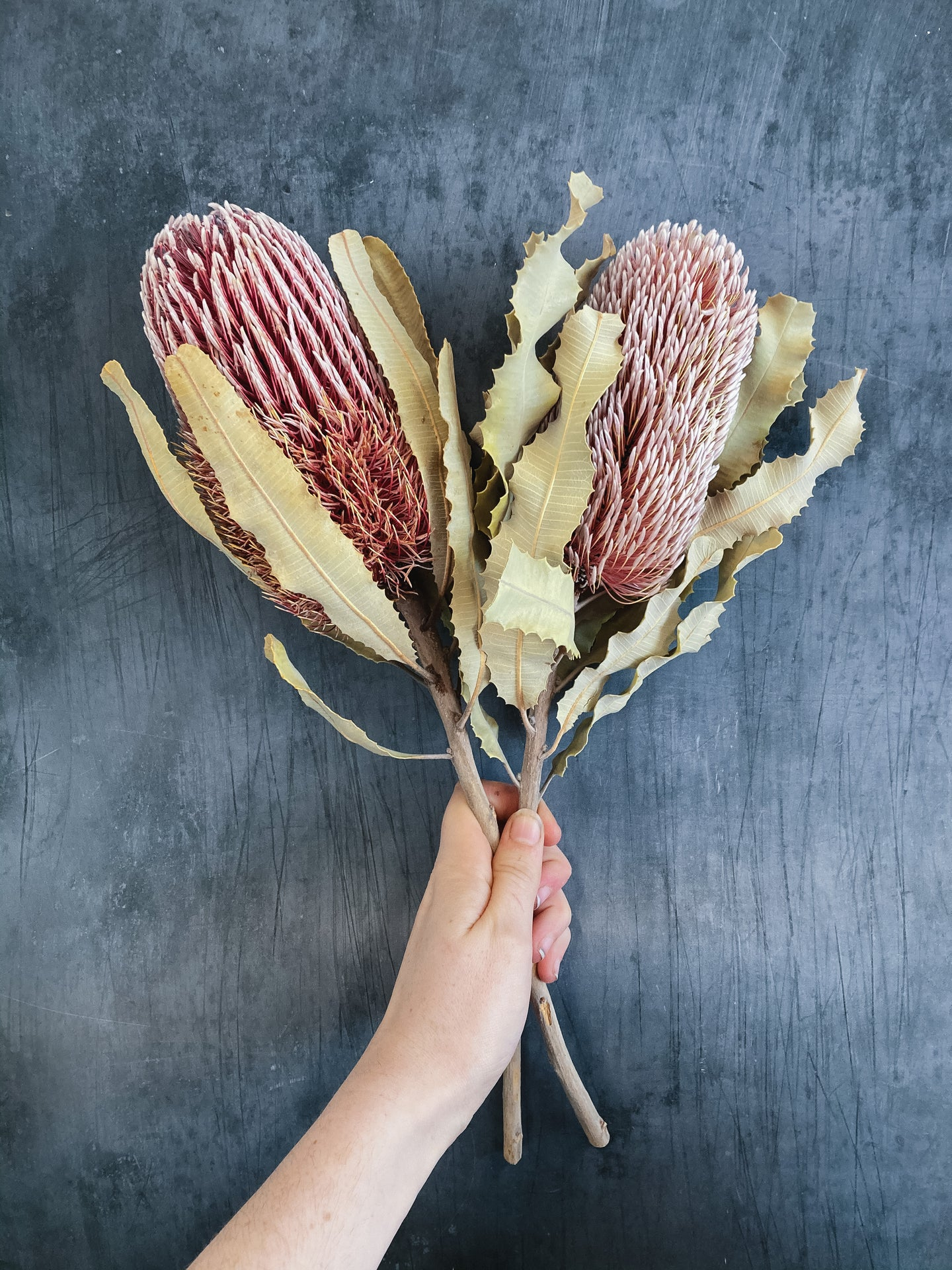 Dried Banksia Flower