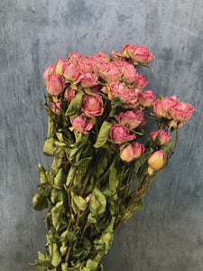 Dried Spray roses - pink