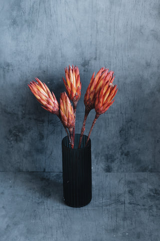 Preserved Flowers: fiery red protea