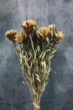 Load image into Gallery viewer, Preserved Leucadendron Rubrum Flowers