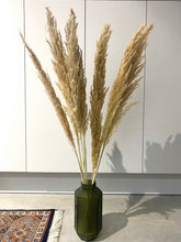 Load image into Gallery viewer, Pampas Grass - Natural