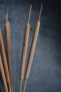 Dried Bulrushes