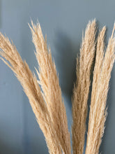 Load image into Gallery viewer, Dried pampas grass - bleached