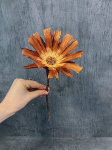 Preserved Protea Flowers - Natural orange