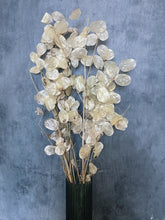 Load image into Gallery viewer, Dried Lunaria Honesty