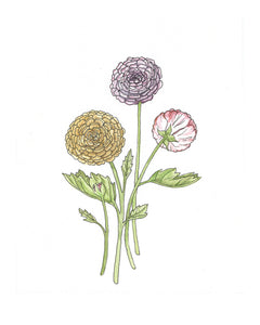 Ranunculus Watercolor Print