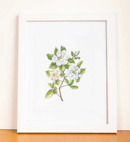 Gardenia Watercolor Print