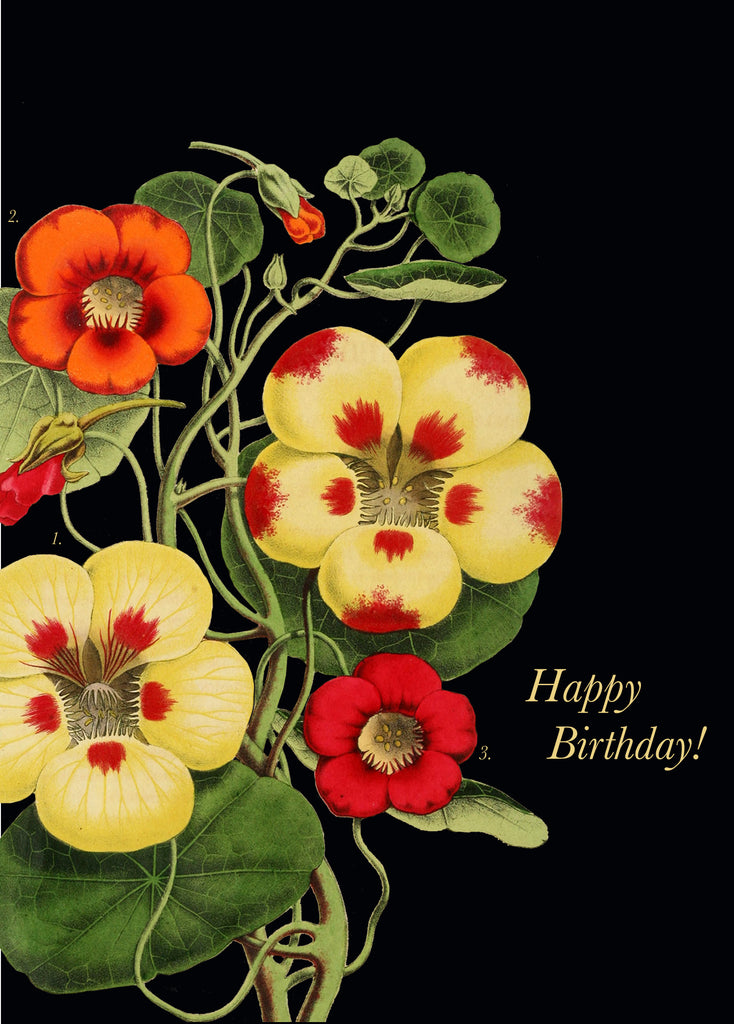 Happy Birthday! Nasturtium • 5x7 Greeting Card