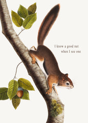 I Know a Good Nut When I See One • 5x7 Greeting Card