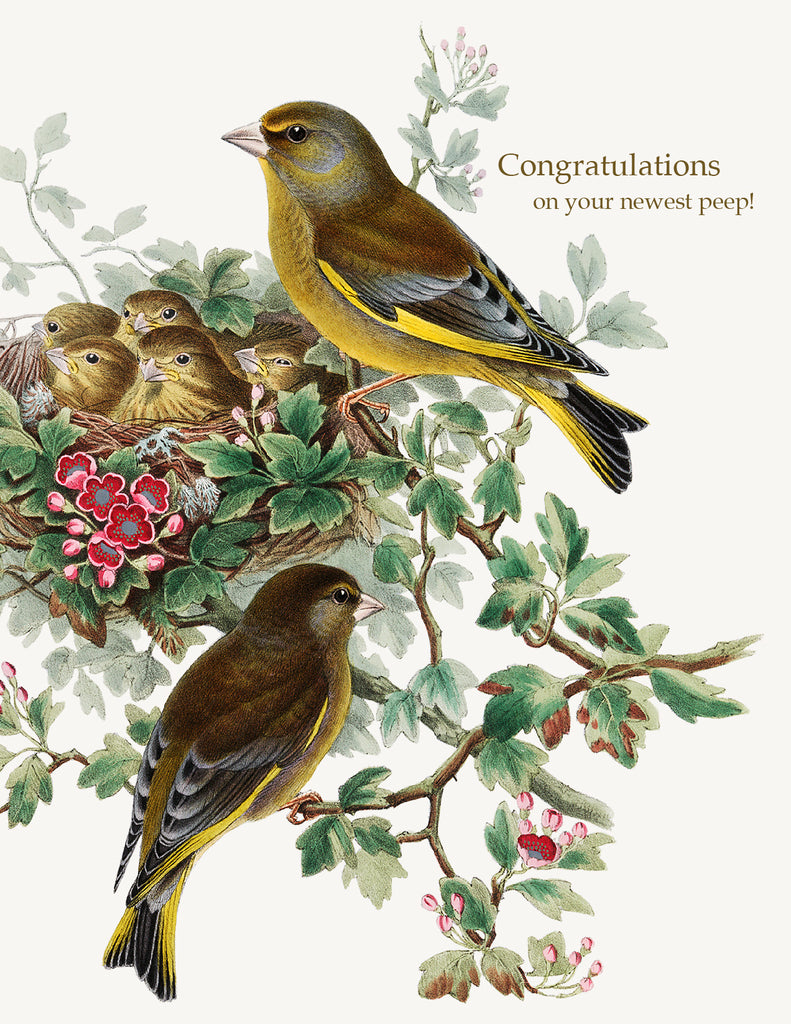 Congratulations On Your Newest Peep! A-2 Greeting Card