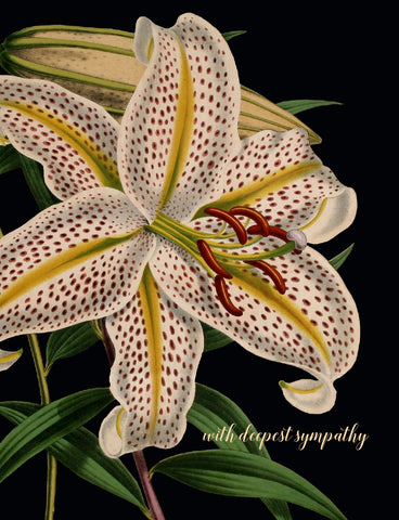 With deepest sympathy (lily) • A-2 Greeting Card