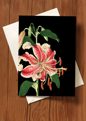 Pink Lily • 5x7 Greeting Card