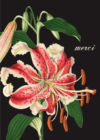 Merci Pink Lily • Mini Card