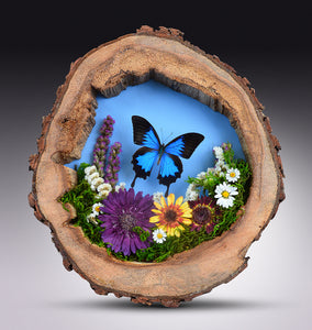 Papilio Ulysses With Flowers in Hollow Log