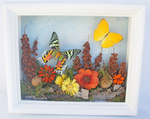 8x10 Flower Shadow Box with Sunset Moth and Yellow