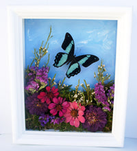 Load image into Gallery viewer, 8x10 Flower Shadow Box with Papilio Bromius