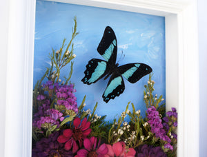 8x10 Flower Shadow Box with Papilio Bromius