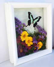 Load image into Gallery viewer, 8x10 Flower Shadow Box with Papilio Phorcas