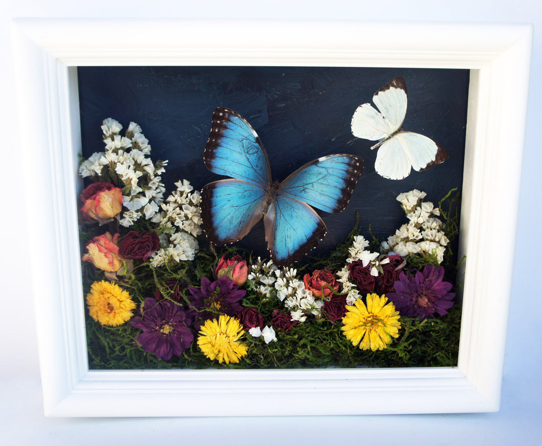 8x10 Flower Shadow Box with Morpho and White