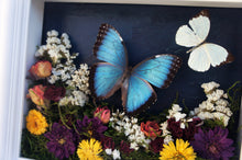 Load image into Gallery viewer, 8x10 Flower Shadow Box with Morpho and White
