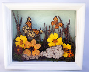 8x10 Flower Shadow Box with Monarch and Owl Eyes