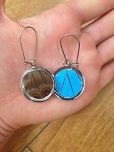 Pendant Butterfly Wing Earrings - Blue Morpho Circle