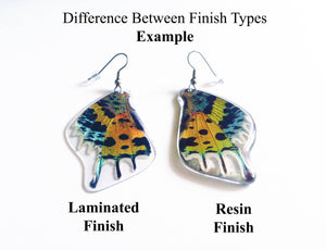Real Butterfly Wing Earrings - Papilio Dardanus