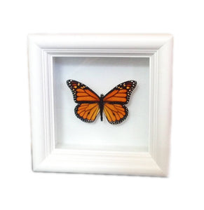 Real Framed Butterfly Taxidermy - Monarch Plain, Insects, Curiosity, Bugs, Taxidermy Art, Natural, Unique, Gift, Special Occasion