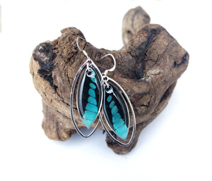 Real Butterfly Wing Sterling Silver Earrings - Graphium Milon Forewing