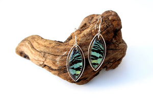 Real Moth Wing Sterling Silver Earrings - Green Sunset Moth Marquis Ear, Drop, Dangle, Butterfly Gift, Insects, Taxidermy Art, Entomology