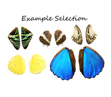 Load image into Gallery viewer, 5 different pairs of real butterfly wings for craft projects