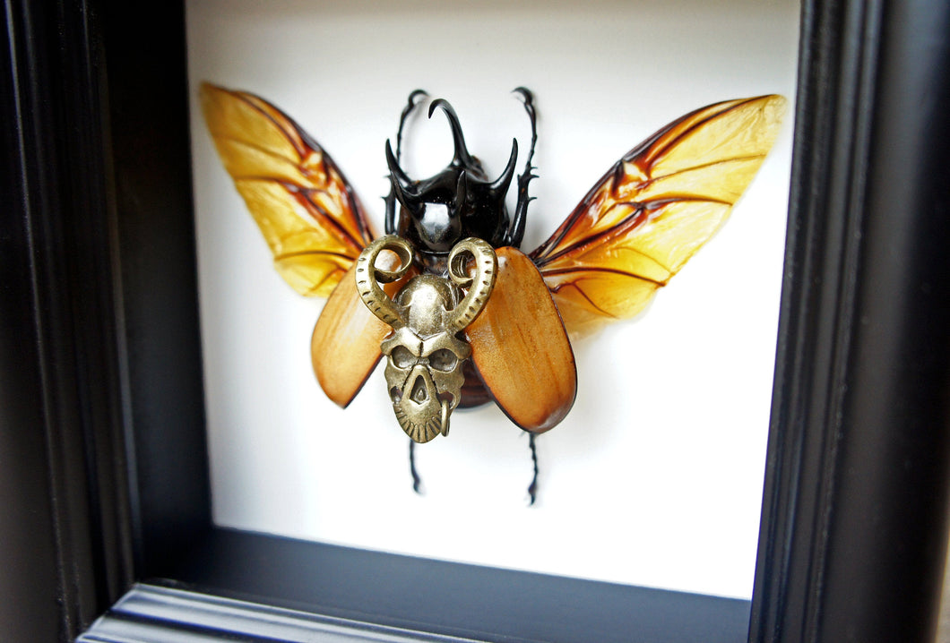 Steampunk Demon Beetle Taxidermy Artwork - Insect Art, Framed Insect Art, Beetle, Gothic Art, Oddities and Curiosities