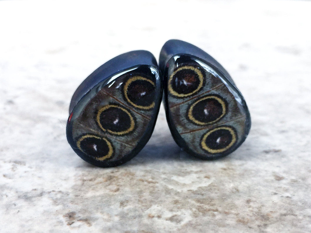 Real Owl Eye Butterfly Wing Teardrop Plugs 1/2