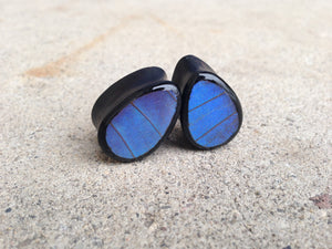 Real Butterfly Wing Teardrop Plugs - Blue Morpho Forewing