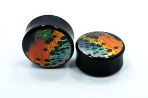 "Real Moth Wing Circle Plugs 1/2""-1 1/2""- Rainbow Sunset Moth - Body Jewelry, Gauges, Teardrop Plugs"