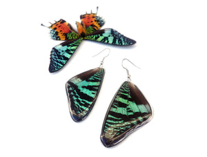 Real Butterfly Wing Earrings - Green Sunset Moth
