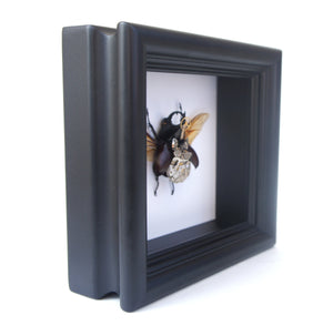 Real Steampunk Beetle Taxidermy - Rhino Beetle - Framed Insect Taxidermy Art, Steampunk Decor, Gifts For Men