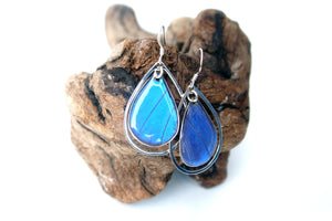 Real Butterfly Wing Sterling Silver Earrings - Blue Morpho Teardrop