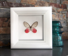 Load image into Gallery viewer, 4x4 Real Bright Pink Framed Butterfly - Blushing Phantom