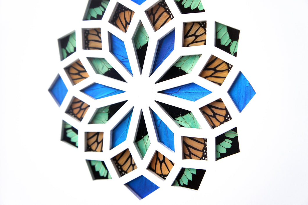 11x14 Real Butterfly Wing Pattern in Kaleidoscope Window- Phorcas, Morpho, Monarch