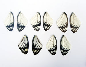 Real Delias Hyparete Butterfly Wings for crafting and art projects - Insect Spreading Supplies - Entomology