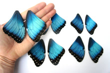 Load image into Gallery viewer, Real Morpho butterfly wings for crafting and art projects - nature jewelry supplies