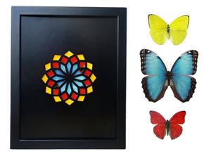 11x14 Real Butterfly Wing Pattern in Kaleidoscope Window- Yellow, Red, Morpho in Black