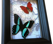 Load image into Gallery viewer, 5x7 Real Butterflies On Map Shadowbox - Bromius and Sangaris