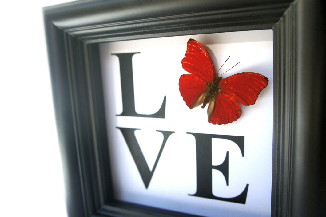 5x5 LOVE Butterfly Shadowbox Home Decor - Cymothoe Sangaris
