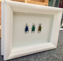 Load image into Gallery viewer, Real Frog Beetle Insect Frame - Framed Taxidermy Art, Nature Art, Oddities, Real Butterfly