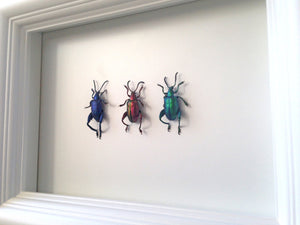 Real Frog Beetle Insect Frame - Framed Taxidermy Art, Nature Art, Oddities, Real Butterfly