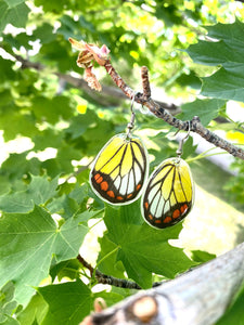 REAL butterfly wing earrings - Delias Hyparete Hindwing