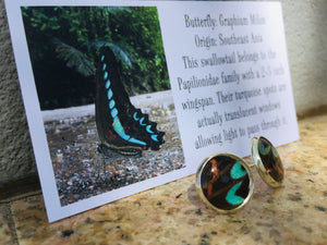 Recycled Butterfly Wing Post Earrings - Graphium Milon - Butterfly Jewelry, Butterfly Gift, Jewelry Gift
