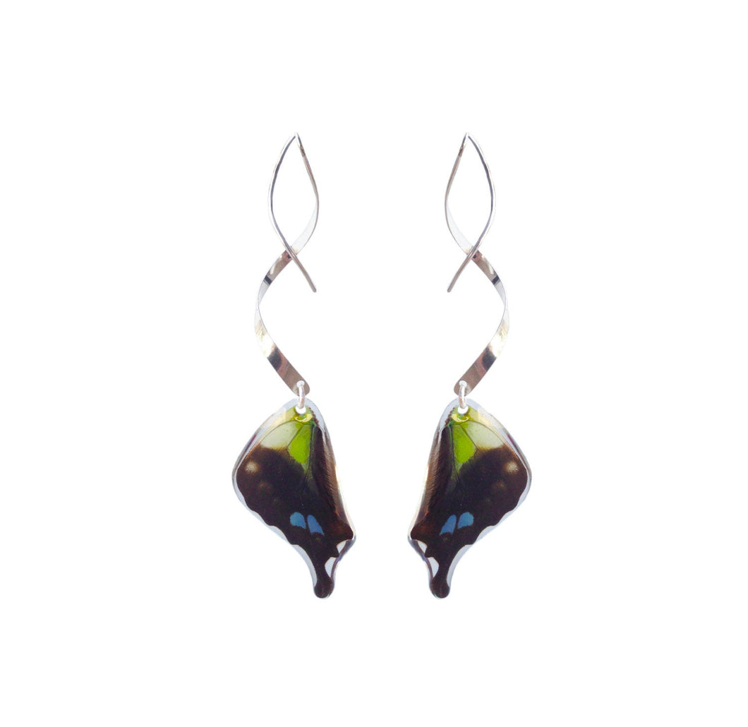 Real butterfly wing earrings with sterling silver twist - Graphium Weiskei